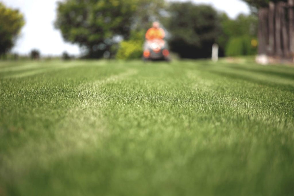lawn care with lawn mower