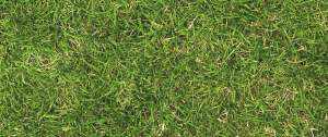 best crabgrass killer will be used for the lawn