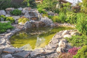 a pond has been cleaned best pond vacuum by