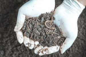 a hand is holding worm casting