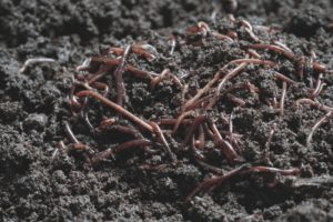 the benefits of worm castings